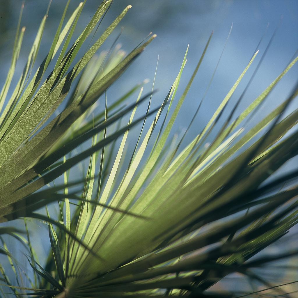 Sermon–April 13, 2014–Palm/Passion SundayA